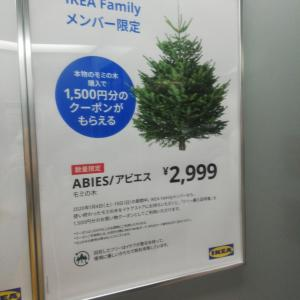 IKEAの生モミの木発売初日買いに行きました