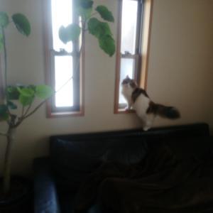 猫を飼ってから我家の変化2つ