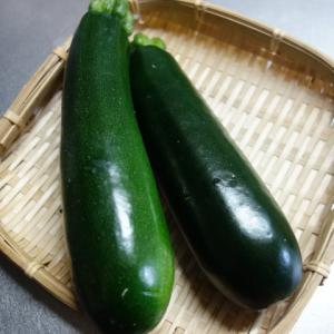 ズッキーニの育て方 種から収穫までを通してわかったこと