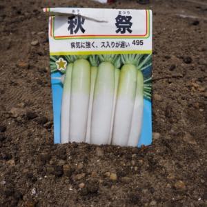 【大根】種まき 不織布トンネル掛け