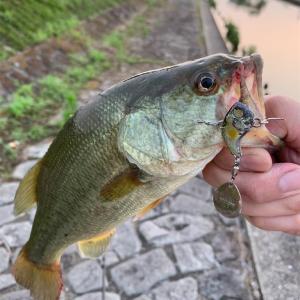 夏のデラクーによるリアクション釣法を公開する!