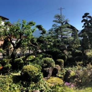 アカマツとチャボヒバがメインの庭の剪定