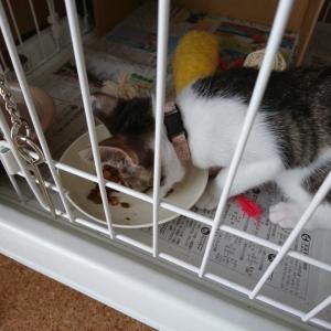 ご飯皿と給水器と猫ニキビ