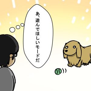 愛犬と遊んだ話