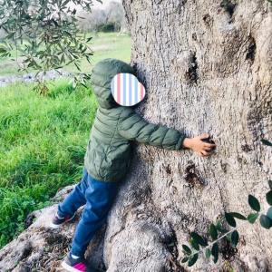 樹齢300年オリーブの木から出来たもの