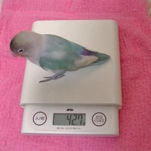 体重測定(11ヶ月ぶり)