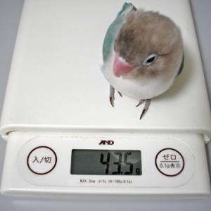 体重測定(3ヶ月ぶり)