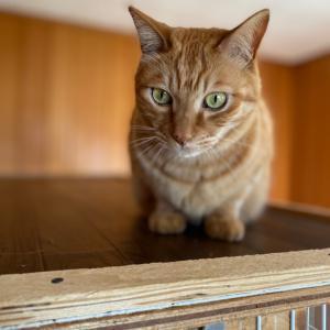 照れる猫、チャーちゃん(タイトルを猫に聞いてみた!)