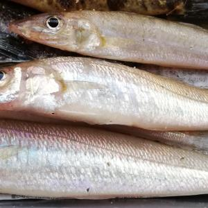 週末下手釣り日記2021  4月の大潮
