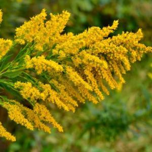 秋の花粉症で地味につらい