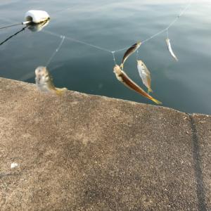 豆アジのサビキ釣りを極める②:手返しを良くする