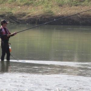 揖保川の鮎は今年も無理か
