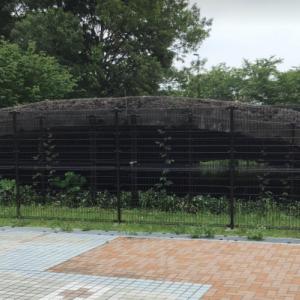 掩体壕 大沢2号(東京都三鷹市 武蔵の森公園内)