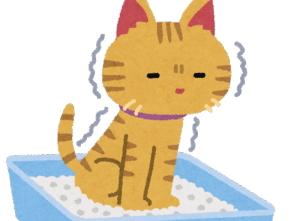[韓国の反応]かりんとうをう◯ちと勘違いして、食べてる主を心配してくる猫のあまりの可愛さに韓国人も感動!「韓国ネット民]表情で十分すぎるほど伝わるんだな(笑)お前大丈夫かよ??って