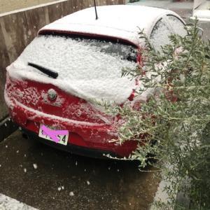 さいたまは朝から雪