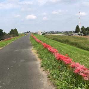 2週間ぶりのRUNは小江戸大江戸コース
