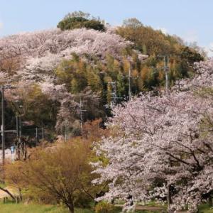 桜の丘≪三室山≫