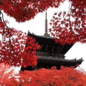 2019年11月 京都⑦≪真如堂≫