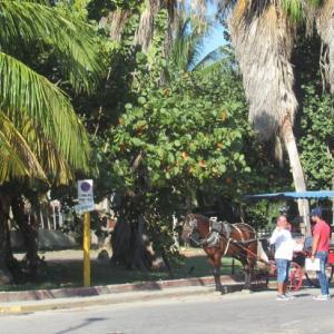 キューバ旅行記 2020年 1月 2日    バラデロ観光②
