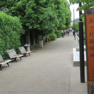 生田緑地とバラ苑              東京ハイキング協会