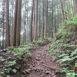 大塚山 日の出山 三室山                     東京ハイキング協会