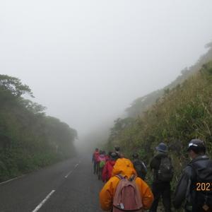 亜熱帯の楽園 八丈島 八丈富士アイランドトレイル 2日間  (2日目 牧場 空港)
