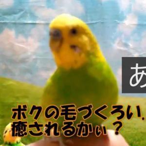 動画 みんな、毎日ご苦労様です。by ユキちゃん