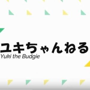 動画 ユキちゃん、飼い主の帰宅を熱烈大歓迎!