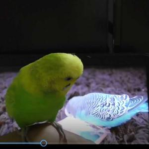 動画 ユキちゃん 謎のお話し