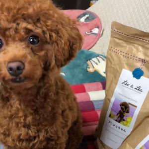 犬が食べてはいけない物の一覧 消化不良や中毒症状