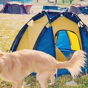 ペットを飼っている飼い主が被災した時の実体験