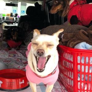 ペットと一緒の避難生活 「在宅・避難所・車中泊・テント泊」