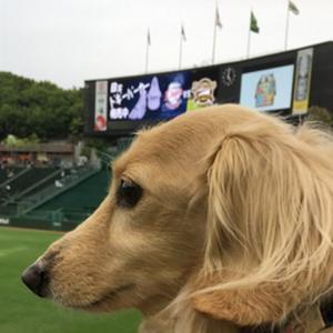 愛犬と野球観戦! Bsペットデー⚾のご紹介