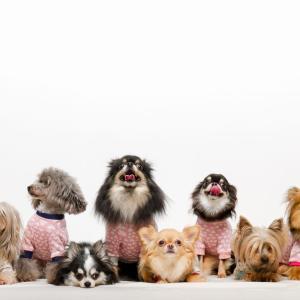 犬種の選び方は!? 見かけだけで選ばないことが重要です