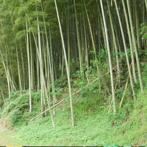 熊本の謎の隧道(ずいどう)・・トンカラリン