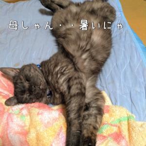 熊本が暑い