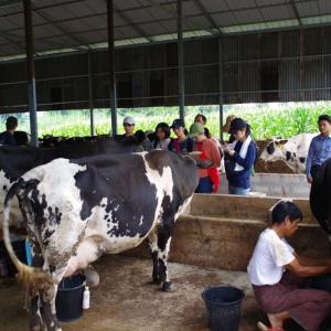 ミャンマー・シャン州の畜産(乳牛)について調査してきたまとめ