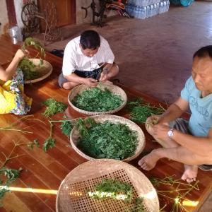 世界一のスーパーフード「モリンガ」をミャンマーで入手せよ!