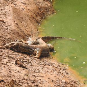 ラグナン動物園の見どころとおすすめの動物を紹介|ジャカルタの週末観光