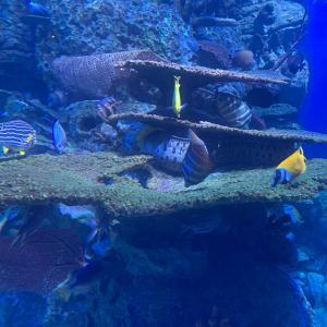 ショッピングモール内の水族館「ジャカルタ・アクアリウム」に行ってみた|水中ショーや5Dシアターも見どころ満載!