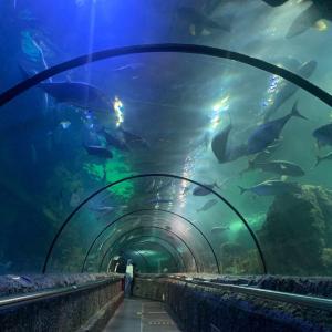 ジャカルタの水族館「アンチョールシーワルド」は、水中ショーやトンネル水槽など見どころ満載!サムドラ(Samudra)も!