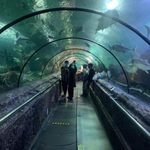 【2021年】ジャカルタの水族館3選まとめ|おすすめの見どころを紹介!