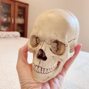 【大分 整体】耳の症状にも頭蓋骨。