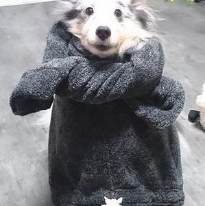 犬のガミースマイル