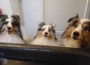 愛犬達に困ってる事…
