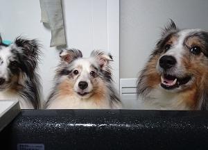 飼い主の異変に…愛犬達は…