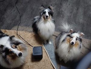 愛犬の選択。と。愛犬のお布団。