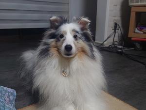 愛犬迄、しょぼんぬ…(-_-;)