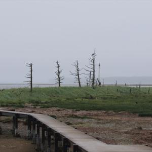 北海道車中泊の旅 10日目 雨の野付半島と沿岸のオジロワシ君たち