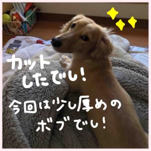ナナちゃんカーット!!